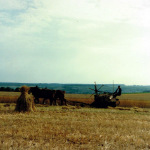 travaux des champs avant 1950
